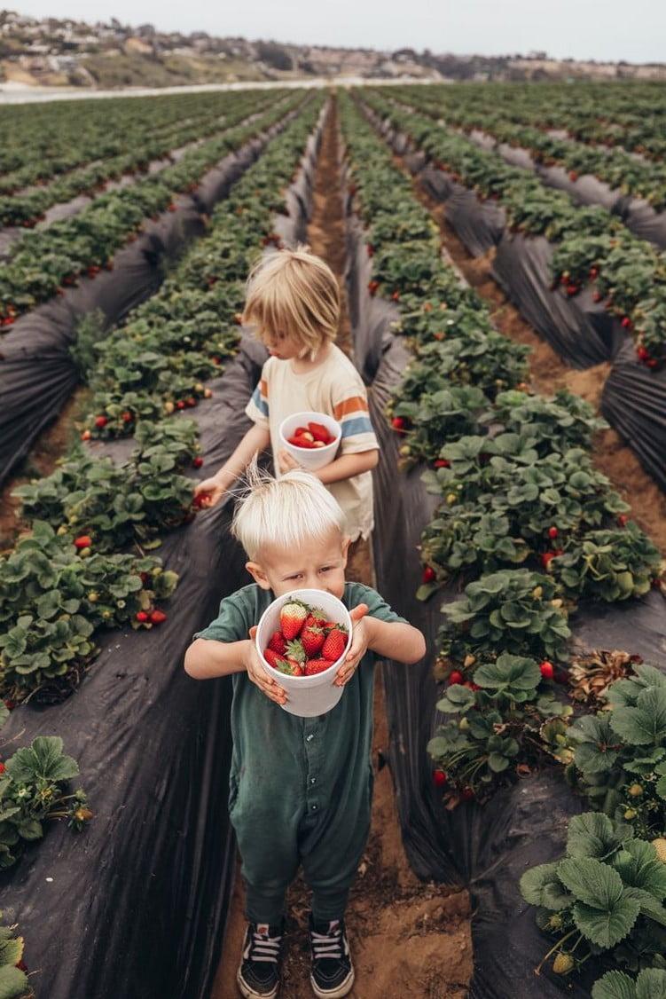 Farmstay giúp trẻ ăn uống lành mạnh