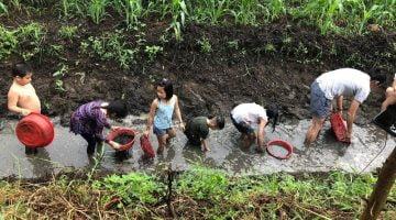 Farmstay nông nghiệp